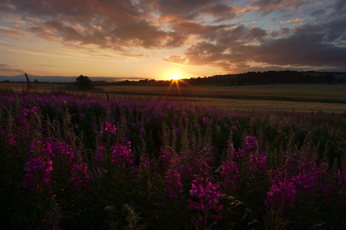 Roadside Sunset at Newbigging, Angus, Scotland